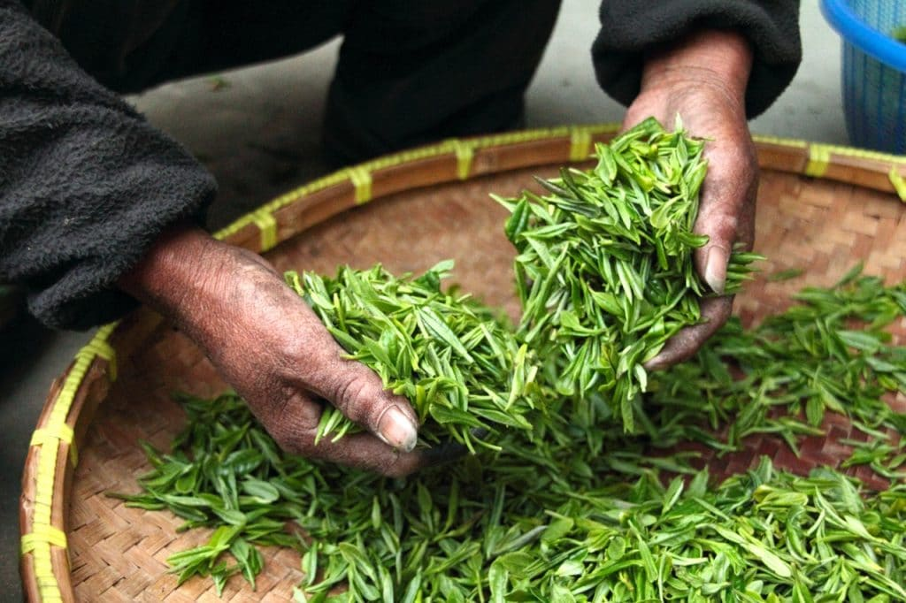 Best Tea For Kombucha